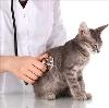 Ветеринарные клиники в Бире